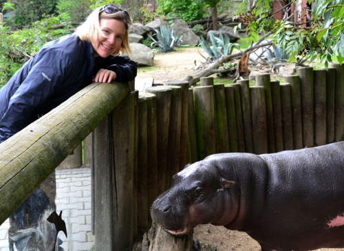 Passing the hat around for Pygmy Hippos